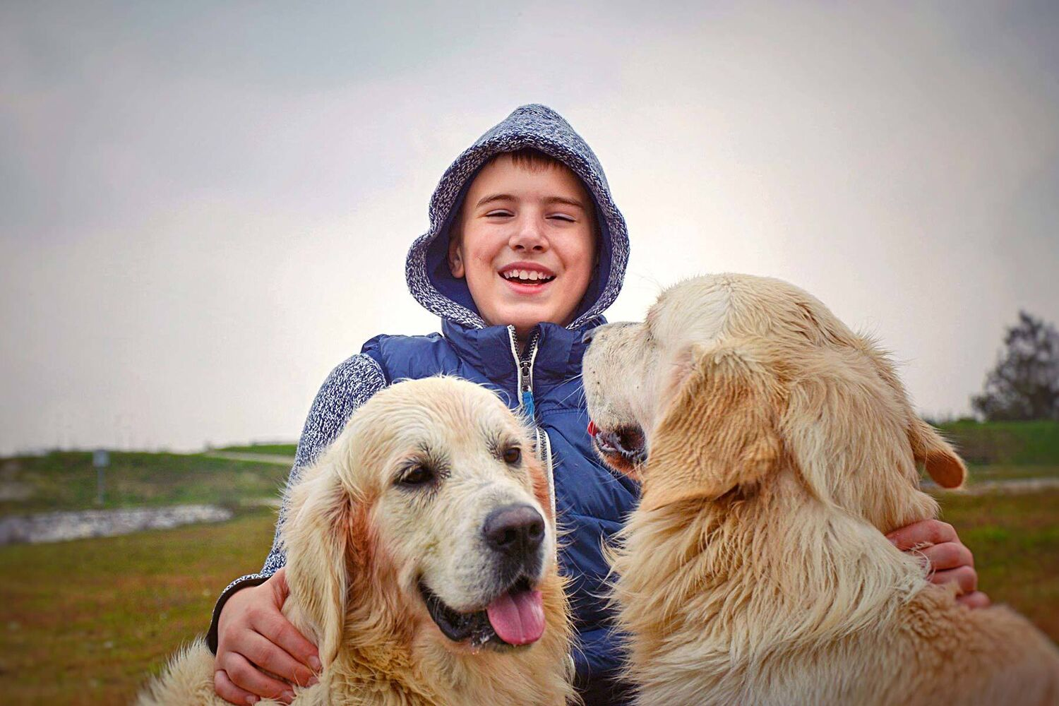 Happy Teenage Boy With Two Wet Golden Retrievers