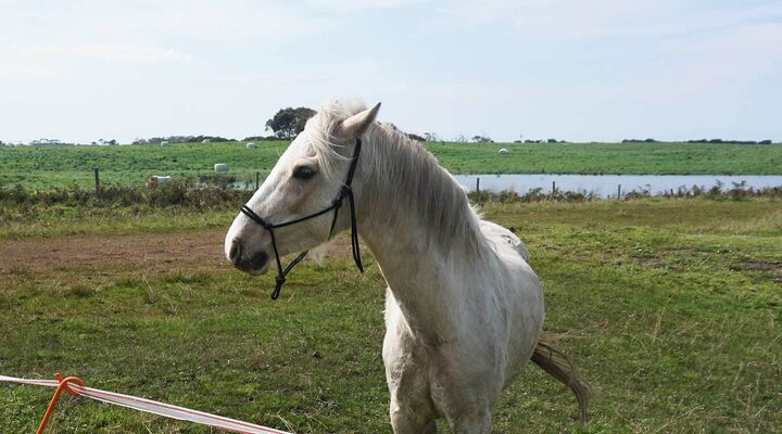 White Horse Standing In Paddock With Small Dam In Background